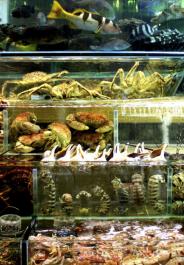 hk fish cropped
